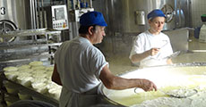 Visit to Cheese production factory